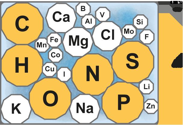 grupos funcionales de los esteroides